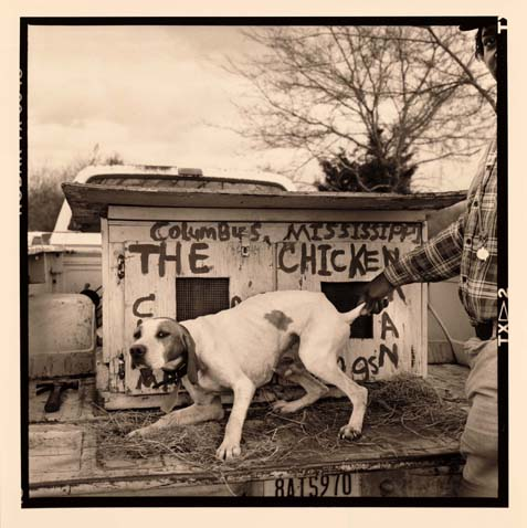The Chickenman's Dog, Lowndes County, Ms