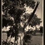 The Demonic Tree