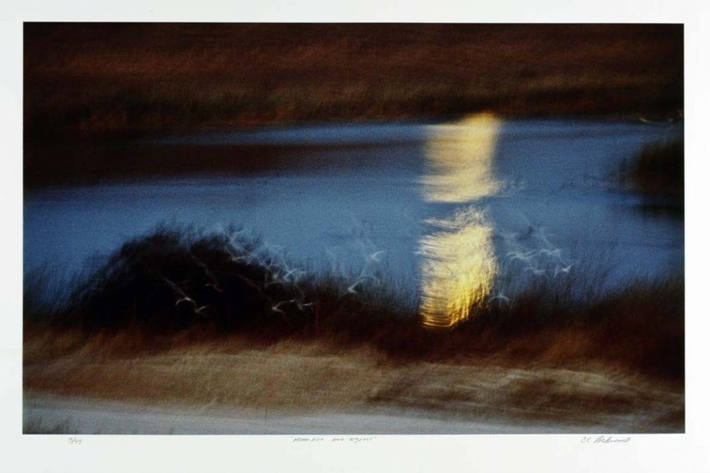 Moonrise and Egrets