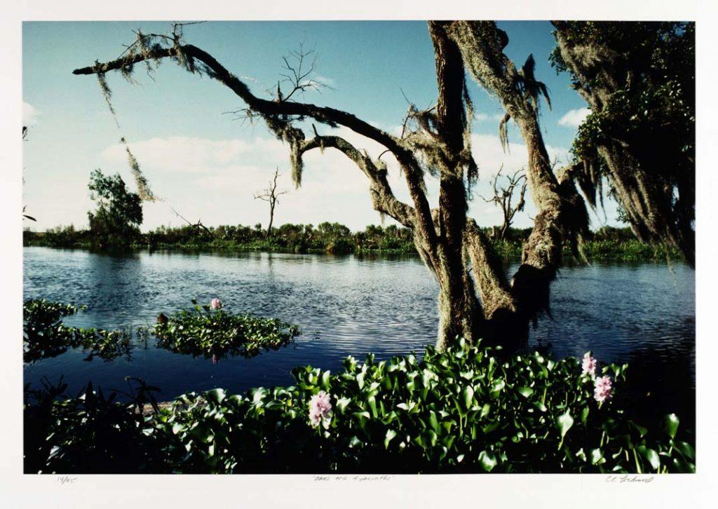 Oaks and Hyacinths