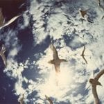 Terns in a Circle
