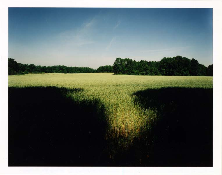 Wheat Field At Old Brownsville and Evergreen, Shelby County