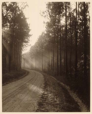 Forest Road (Near Bogalusa, La)