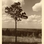 The Source (View From Lookout Point, Hodges Gardens, South in Many, La)