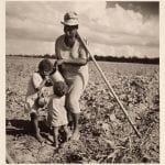 Resting From Hoeing Cotton, on the Allen Plantation