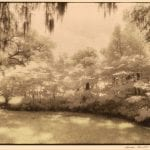 Avery Island, Louisiana from the American Gardens Series