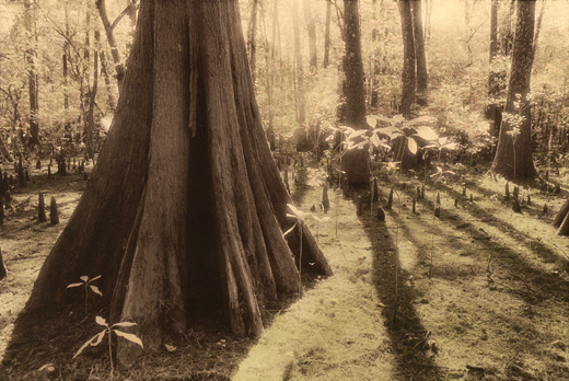 Untitled From Louisiana Dreamscape