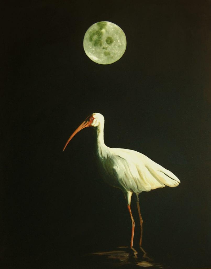 Ibis in the Night