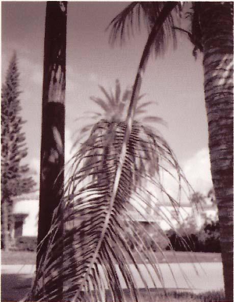 Falling Palms