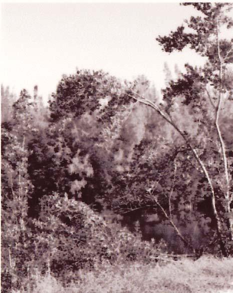 Oleta River Park 5