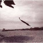 Flying Palm