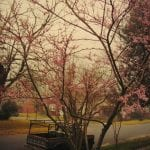 Red Buds/ F-150, 255 Beverly Drive