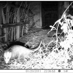 Possum, 4705 N. Tonti St., January 20, 2011, 10:35:55, 54f