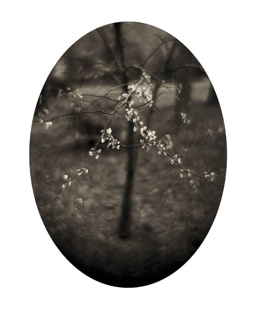 Spring, 1/6
